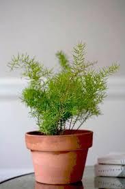 best low light indoor trees good indoor trees for low light home design