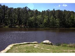 Texas forest images Angelina national forest a texas natlforest located near lufkin jpg