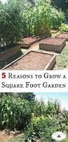 What Is Urban Gardening 1107 Best Gardening Images On Pinterest Gardening Growing