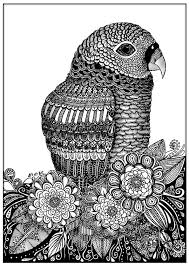parrot zentangle sabrina zentangle coloring pages adults