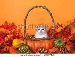 pets and thanksgiving stock images royalty free images vectors