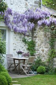 wisteria sinensis australian bush flower 736 best wisteria images on pinterest wisteria architecture and