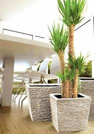 Indoor Planters Indoor Tree Planter Home Design Styles