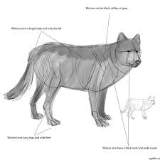 wolf drawing guide a step by step drawing guide to learning how