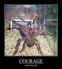 Funny Spider Meme - i can has cheezburger courage funny animals online cheezburger