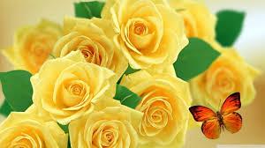 yellow roses and butterflies 4k hd desktop wallpaper for 4k