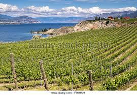 Vineyard Bench Vineyard Naramata Bench Stock Photos U0026 Vineyard Naramata Bench