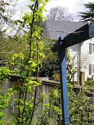 Rasberry Trellis Spring Berries Minerva U0027s Garden Blog