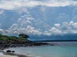 iguana island what do iguanas boas frigates and crabs have in common your