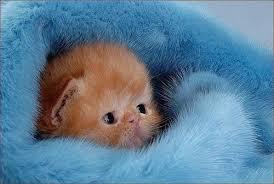 Cute Kittens Meme - create meme work work cute kitten kittens funny pictures