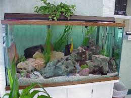 nature aquariums and aquascaping inspiration aquarium rock