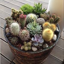 wholesale cactus seeds buy cheap cactus seeds from