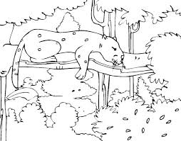 rainforest trees coloring pages forest animals page animal