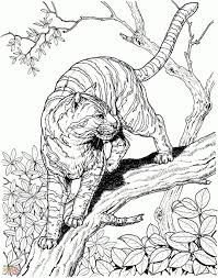 saber tooth tiger coloring pages tiger smilodon populator tiger