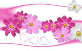 Flower Pictures Wallpaper Rose In Love Aster Flower Wallpup Com