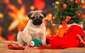 dog christmas christmas dog wallpapers frankenstein