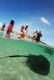 14 best fort lauderdale and the everglades images on pinterest