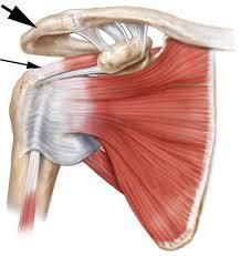 Human Shoulder Diagram Rotator Cuff Syndrome Spine Specialist Vail Aspen Denver Co