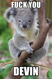 Meme Generator Koala - fuck you devin koala sitting in a tree meme generator