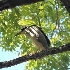 the stony brookside bed and bike inn bird in tree the stony