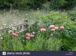mill cottage wookey somerset uk sally gregson ornamental