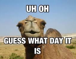 Hump Day Camel Meme - camel meme amanda s new life