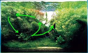 Aquascape Moss Aquatic Eden Aquascaping Aquarium Blog