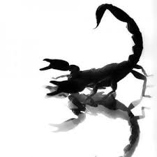 findtattoodesign images design black scorpion