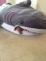 Shark Bean Bag Shark Bean Bag Chair Florist H G
