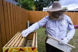 honey bee city makes urban bee hives for miami bee lovers miami