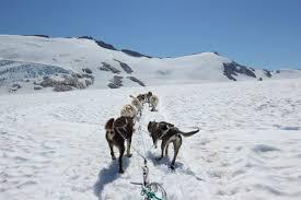 juneau glacier dog sled adventure u2013 a few miles more