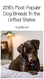 2827 best dog breeds images on pinterest dog breeds pet care