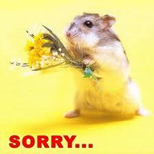 es tut mir leid sprüche sorry es tut mir leid sorry entschuldigung