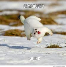 Ermagerd Meme - 12 funniest ermahgerd animals weknowmemes