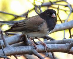the malibu post winter birds