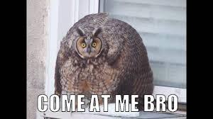 Owl Memes - owl memes youtube
