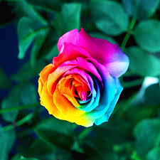 colorful roses colorful rainbow banggood official gadget and