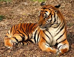 wild animals images Why are wild animals in danger of extinction name some of those