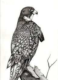 pen and ink drawings pen and ink bird by aethelgar on deviantart
