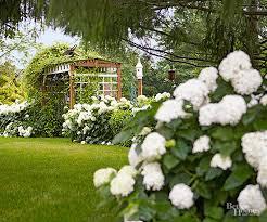 hydrangea white white hydrangeas