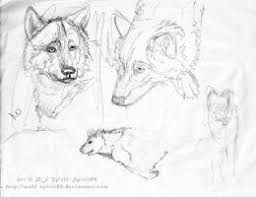 ancient wolf bw by dogmeatsausage on deviantart