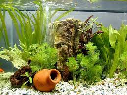 artificial plant can also be a choice for your aquarium