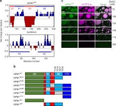 Self interaction of NPM1 modulates multiple mechanisms of liquid