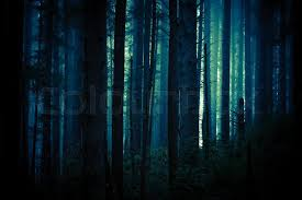 forest backdrop foggy and creepy forest in blue color grading forest