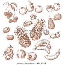 banana sketch stock images royalty free images u0026 vectors