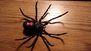 Black Widow Spiders Had A - black widow spider instamorph