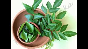 curry tree herb murraya koenigii air dried curry leaves 100 herbal organic no gmo spices asian