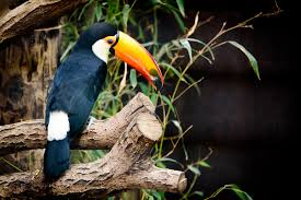 newcastle disease in birds symptoms causes diagnosis
