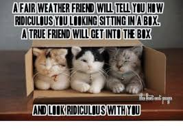 True Friend Meme - a fair weather friend you how ridiculous youl king sitting in abx