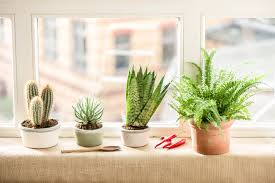 magnificent indoor plants for kitchen for your indoor herb garden